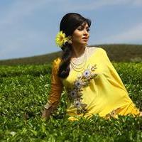 Sadha - Eli Movie Stills   Picture 1033110