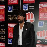 SIIMA Awards 2015 Red Carpet Photos | Picture 1090412
