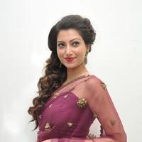 Hamsa Nandini at Bengal Tiger Movie Audio Launch Stills